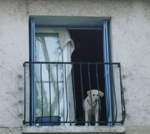 Arles - dog in second floor window